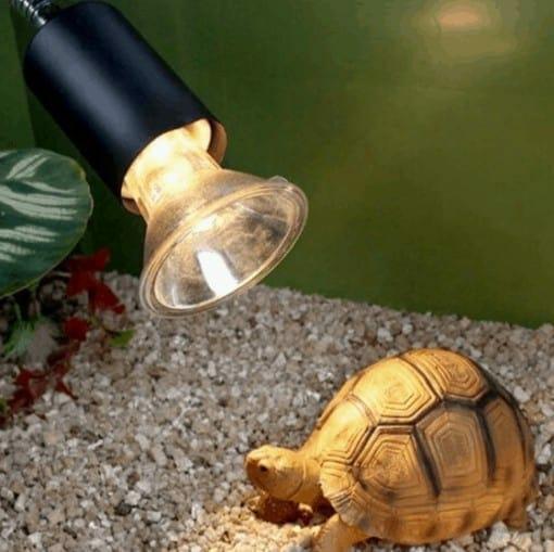 lampe UVA et UVB avec une tortue terrestre