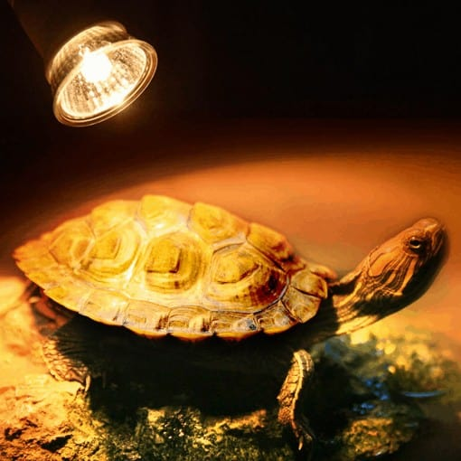 Ampoule pour lampe UV et Chauffante pour Tortue Terrestre