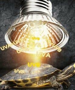 Ampoule pour lampe UV et Chauffante pour Tortue UVA et UVB