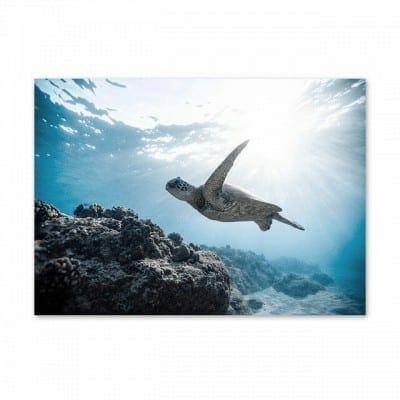 Photo de tortue dans un paysage marin enchanteur