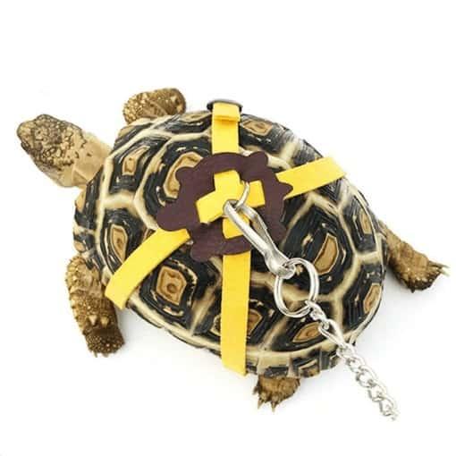 laisse pour tortue de couleur jaune