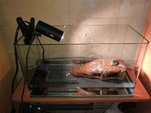 lampe UV chauffante noire pour tortue