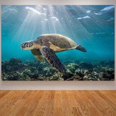 Photo de tortue de mer géante qui nage paisiblement dans la lumière du soleil