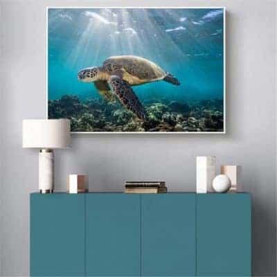 Photo de tortue de mer géante qui nage paisiblement dans la lumière