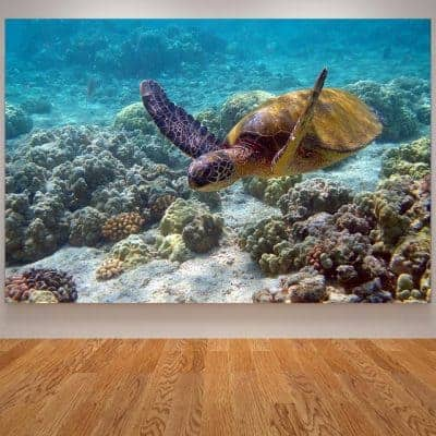 photo de tortue de mer géante qui nage paisiblement à travers les coraux