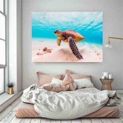 Photo de tortue de mer géante qui nage paisiblement proche du sable