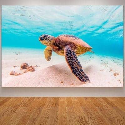 Photo de tortue de mer géante qui nage paisiblement dans l'eau et proche du sable