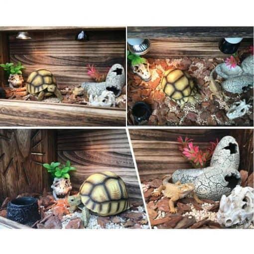 intérieur terrarium tortue en bois de palownia