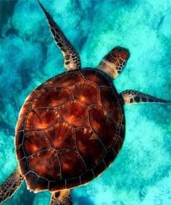 Une tortue dans les fonds bleus