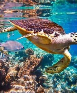 Une tortue dans les coraux