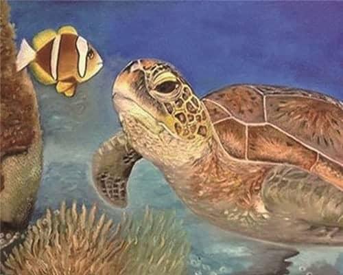 Une tortue en discussion avec un poisson