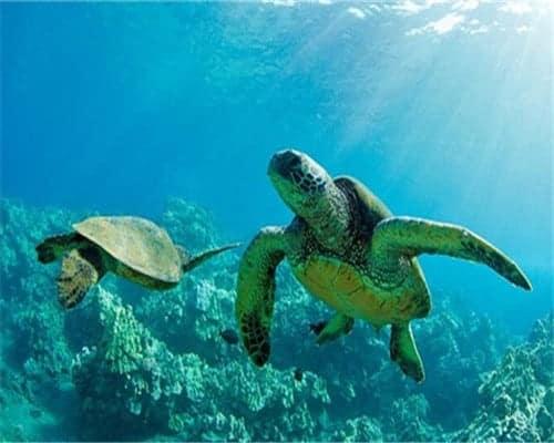 Image des tortues