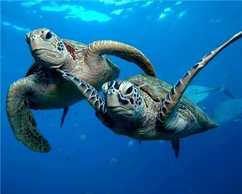 Les tortues en balade