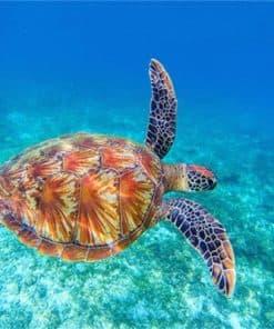 La tortue en voyage