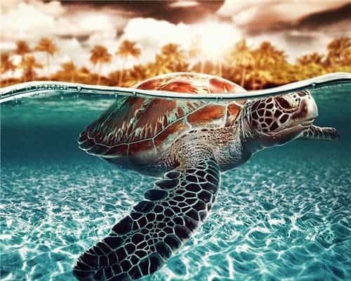Mélange de couleur tortue et palmiers