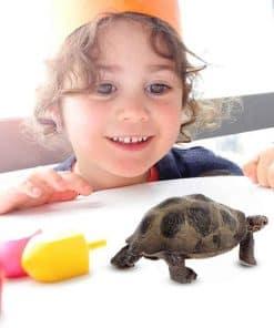 Jouet tortue pour enfant content