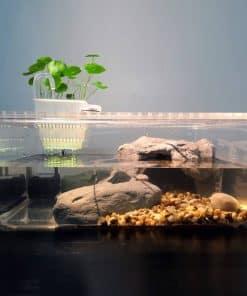 Aquarium pour tortue d'eau avec pompe à eau intégrée