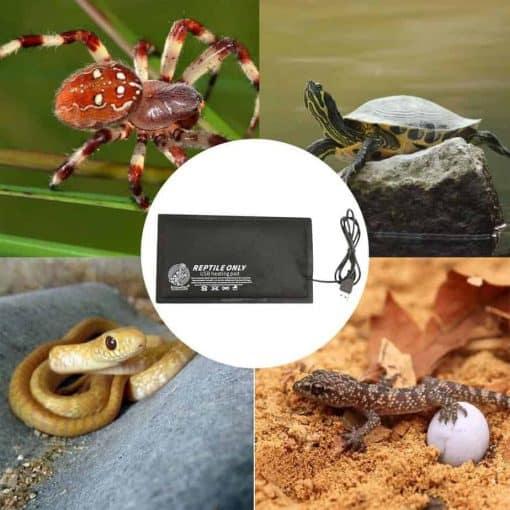 le coussin chauffant pour tous les reptiles