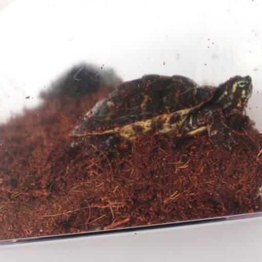tortue dans son enclos avec un sol agréable