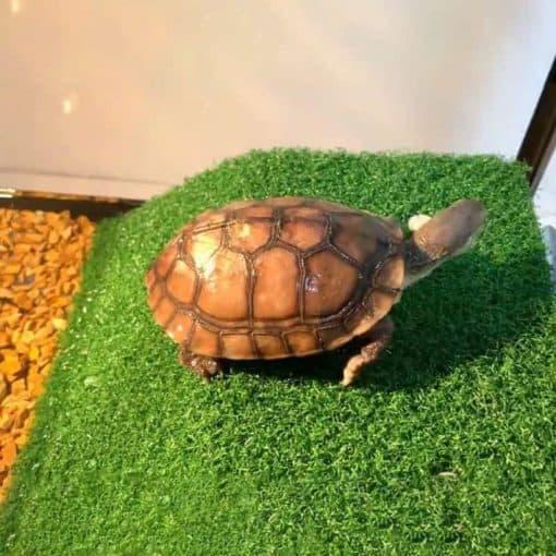 Une tortue sur sa plateforme