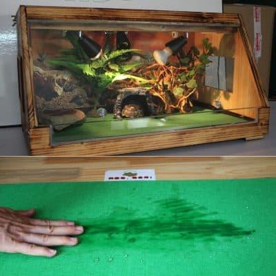 tache sur tapis de sol pour tortue