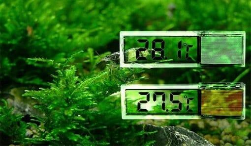 Algues et thermomètre pour aquarium à tortue