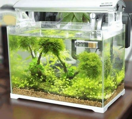 Thermomètre pour aquarium à tortue de mer