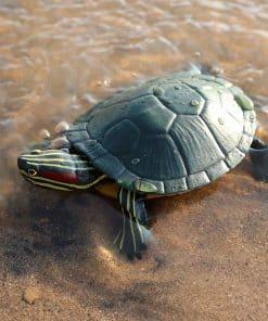 tortue de mer en plastique dans l'eau