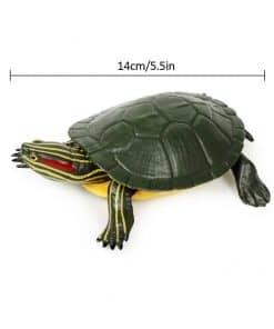 dimension de la tortue