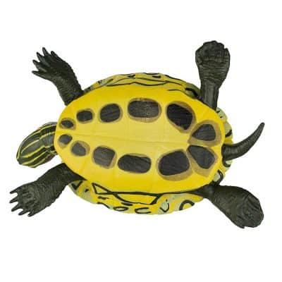 ventre de la tortue