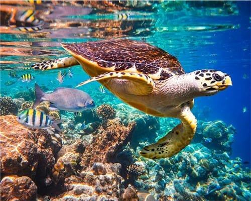 dessin de tortue de mer colorée nage seule dans les coraux peinture de tortue