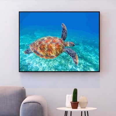 tableau tortue de mer peinture acrylique DIY comment dessiner une tortue facile