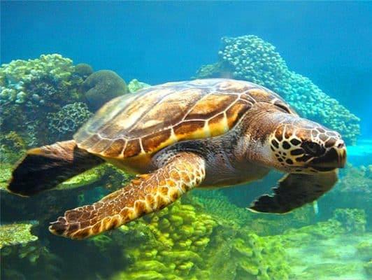 tortue verte fonds marins