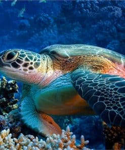 image pour dessiner une tortue de mer