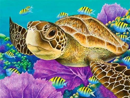 image tortue avec poissons