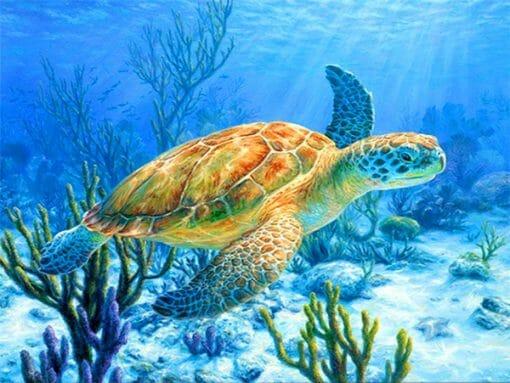 photo de tortue fonds marins