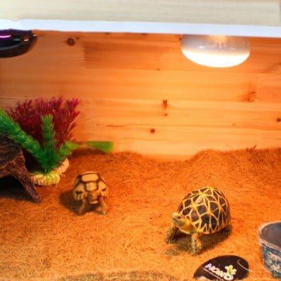 photo de vivarium tortue avec tapis de sol en fibre de noix de coco