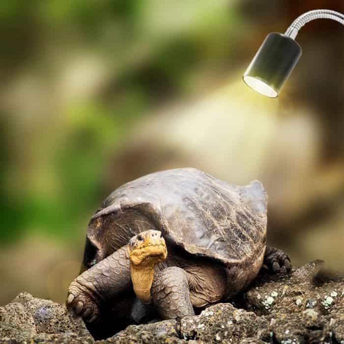 lampe uv pour chélonien