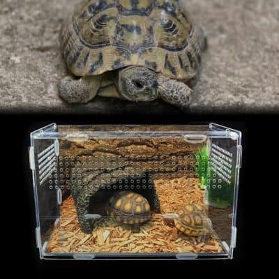 terrarium tortue en acrylique